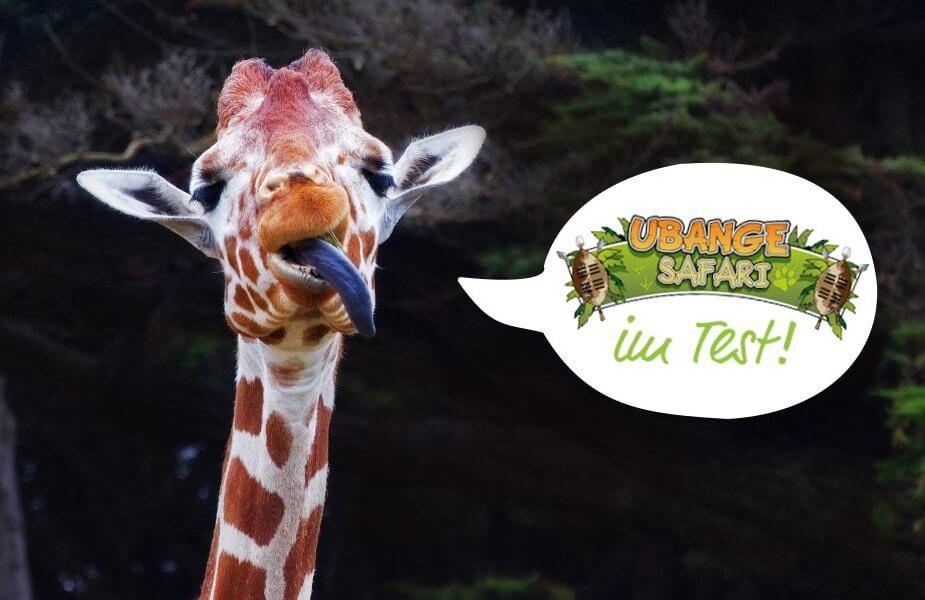 Giraffe streckt die Zunge raus und sagt: Ubange Safari im Test!