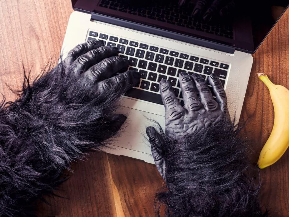 Affe und Laptop geht zusammen: bei Ubange Safari im Einsatz